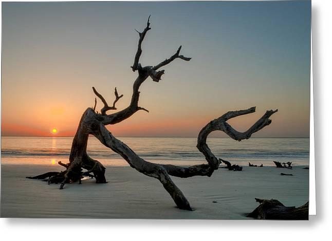 Jekyll Island Driftwood Greeting Card