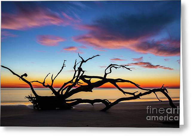 Jekyll Island Sunrise On Driftwood Beach Greeting Card