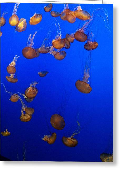Jelly Fish 1 Greeting Card by Dawn Marie Black