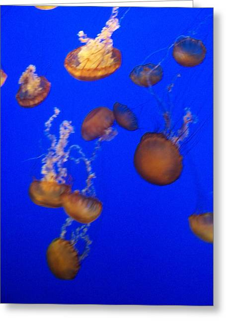 Jelly Fish 2 Greeting Card by Dawn Marie Black