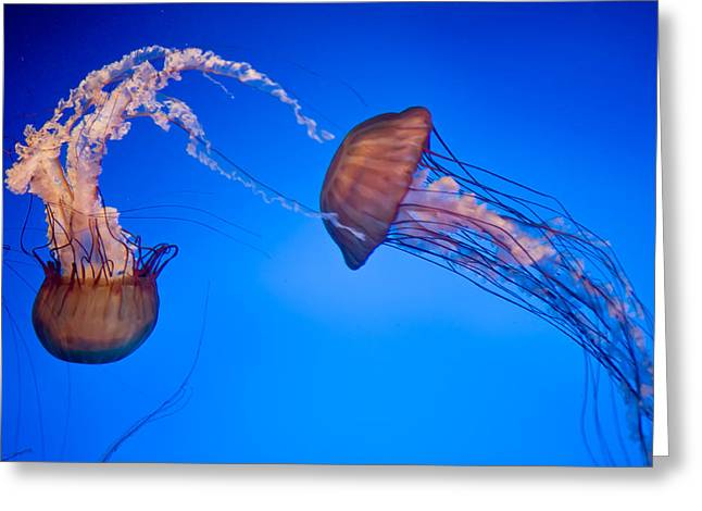 Jelly Fish IIi Greeting Card by James Dricker