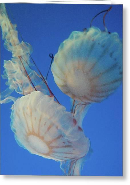 Jelly Fish Greeting Card by Samantha Kimble