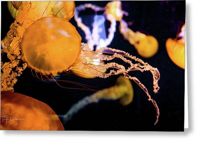 Jelly Storm Greeting Card