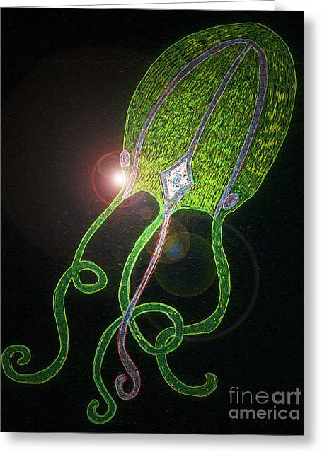 Jellyfish Dazzle Greeting Card by Norma Appleton