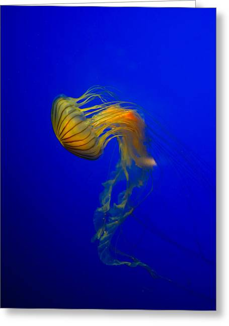 Jellyfish From The Deep Blue Greeting Card by Nila Newsom