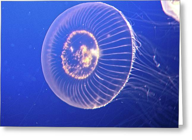 Jellyfish Iv Greeting Card