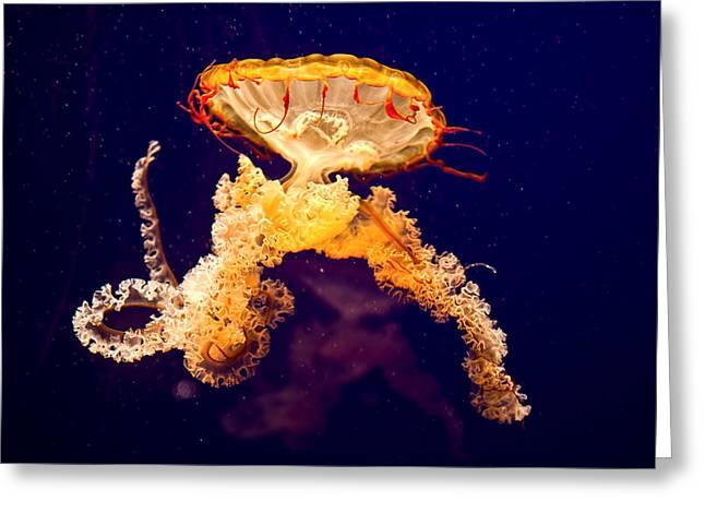 Jelly Fish Greeting Cards - Jellyfish Greeting Card by Jason Blalock