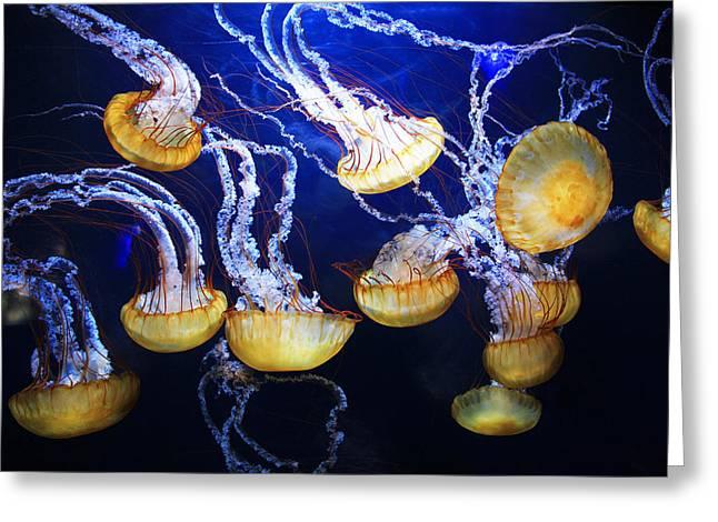 Jellyfish Greeting Card by Sierra Vance