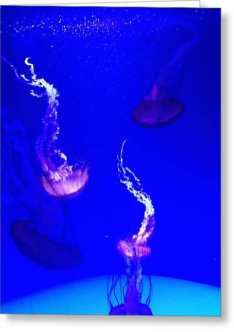 Jellyfish Wall Art 2 Greeting Card