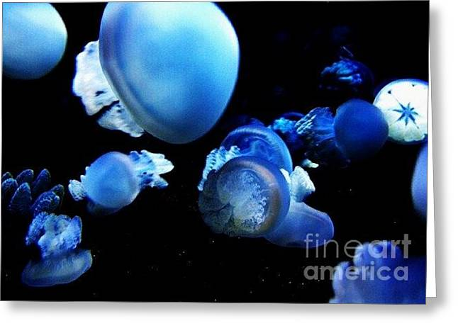Greeting Card featuring the photograph Jellyparty by Vanessa Palomino