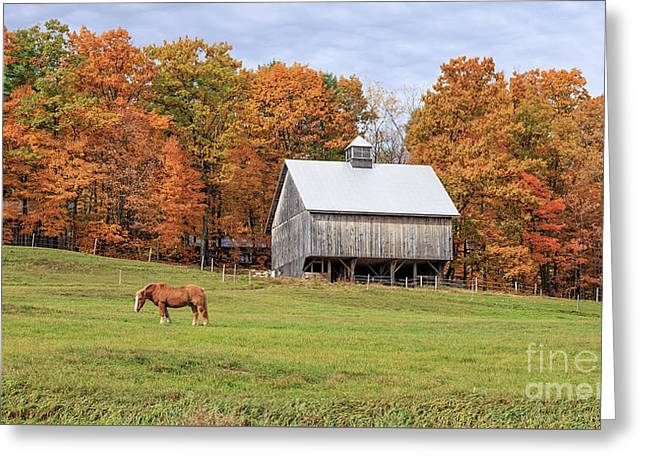 Jericho Hill Vermont Horse Barn Fall Foliage Greeting Card by Edward Fielding