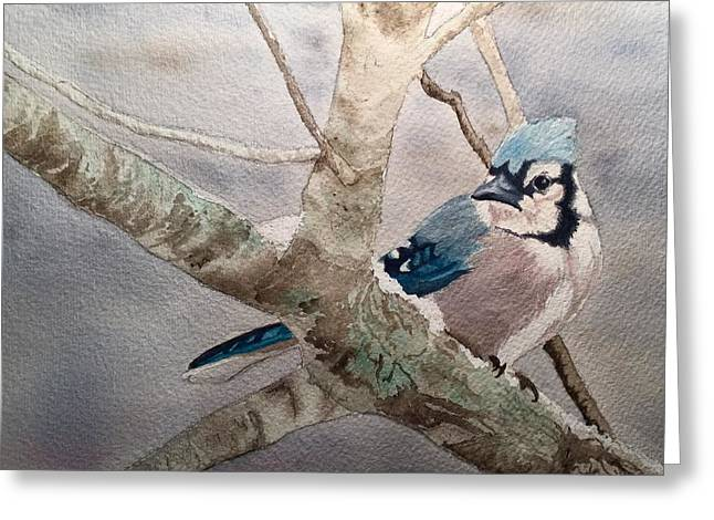 Cold Winter's Jay Greeting Card