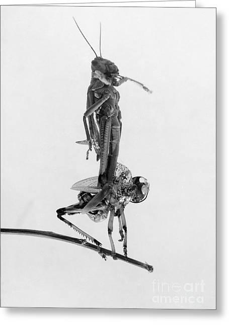 Jerusalem: Locusts, 1915 Greeting Card by Granger