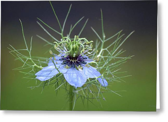 Jester's Hat Flower Greeting Card