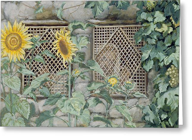 On Paper Paintings Greeting Cards - Jesus Looking through a Lattice with Sunflowers Greeting Card by Tissot
