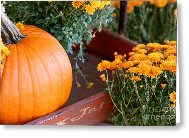 Jet Pumpkin Greeting Card by Cathy Dee Janes