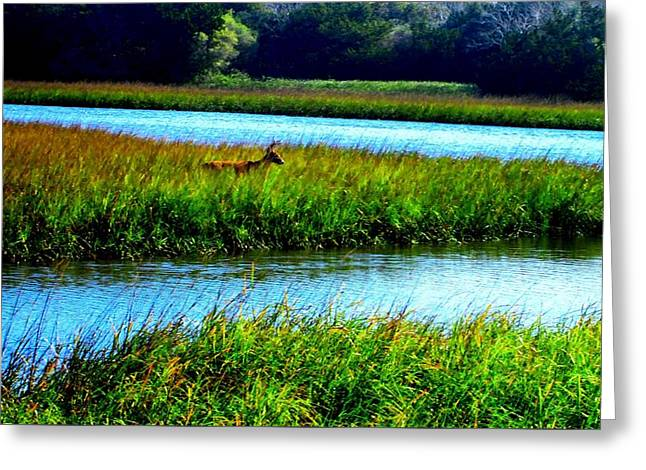 Jetty Mayport Buck #3 Greeting Card by Deb Campbell