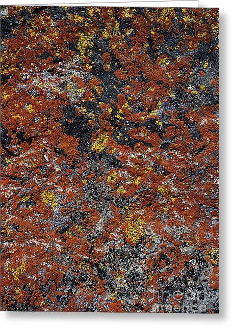 Jewel Lichen Greeting Card by Greg Vaughn - Printscapes