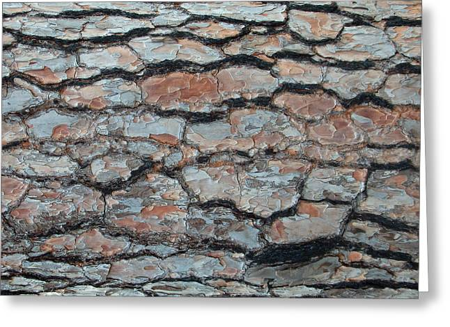 Jigsaw - Pine Tree Bark Greeting Card