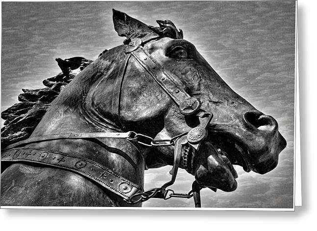 Joan Of Arc's Horse Greeting Card