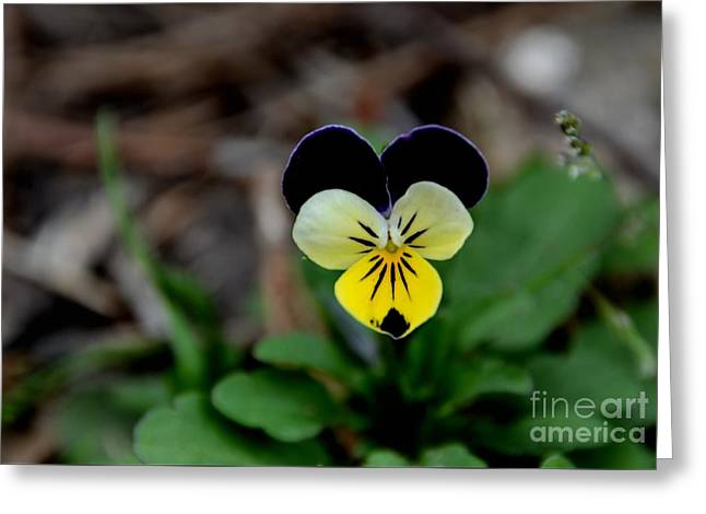 Jonny Jump Up - Relative To A Pansy Greeting Card