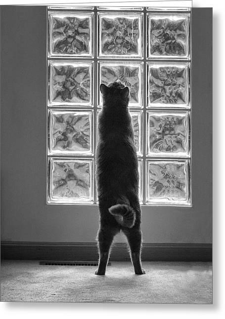 Joseph At The Window Greeting Card