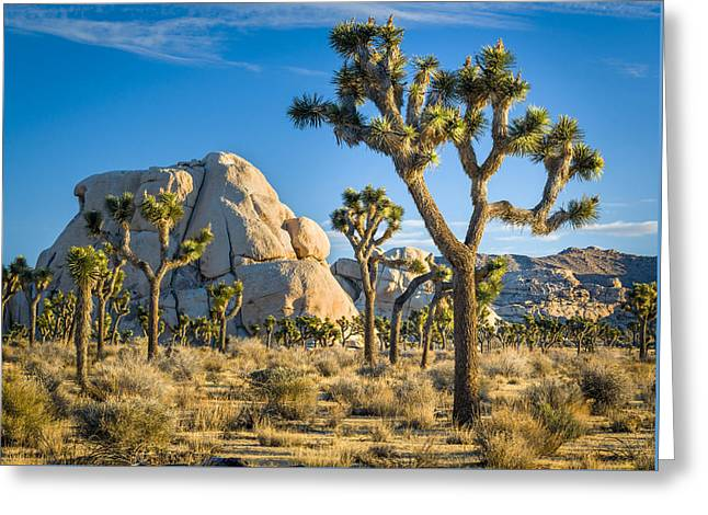 Joshua Tree And Intersection Rock Greeting Card