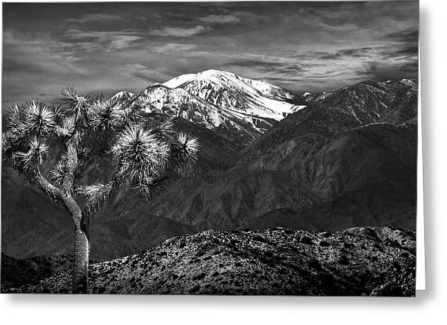 Greeting Card featuring the photograph Joshua Tree At Keys View In Black And White by Randall Nyhof