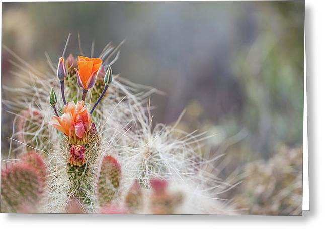 Joshua Tree Cactus And Flower Greeting Card by Peter Tellone