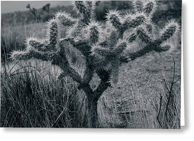 Joshua Tree Cactus Greeting Card