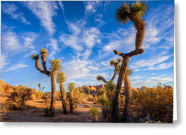 Greeting Card featuring the photograph Joshua Tree Dawn by Rikk Flohr