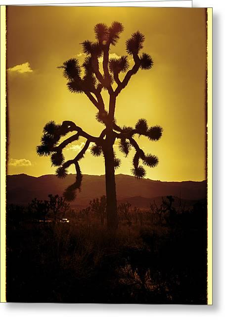 Joshua Tree Glow #2 Greeting Card