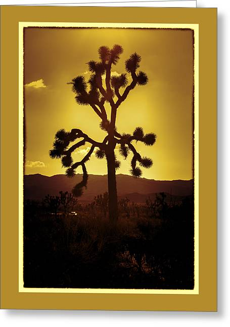 Joshua Tree Glow #2 Greeting Card