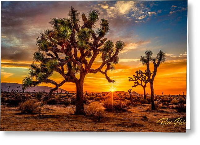 Joshua Tree Glow Greeting Card