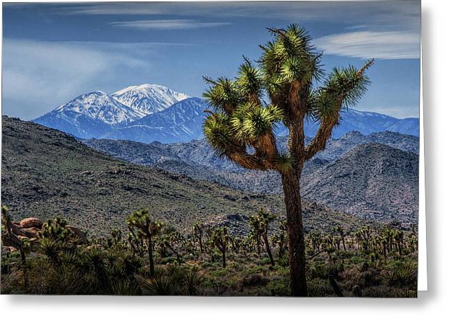 Greeting Card featuring the photograph Joshua Tree In Joshua Park National Park With The Little San Bernardino Mountains In The Background by Randall Nyhof