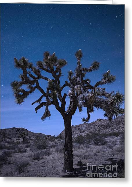 Joshua Tree Greeting Card by Juli Scalzi