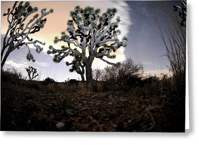 Joshua Tree One Greeting Card by Mike Lindwasser Photography