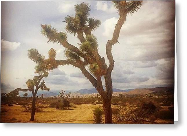 Joshua Tree. #photographer #photo Greeting Card