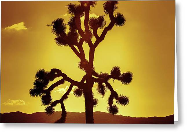 Greeting Card featuring the photograph Joshua Tree by Stephen Stookey
