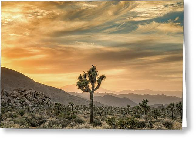 Joshua Tree Sunrise Greeting Card by Joseph Smith