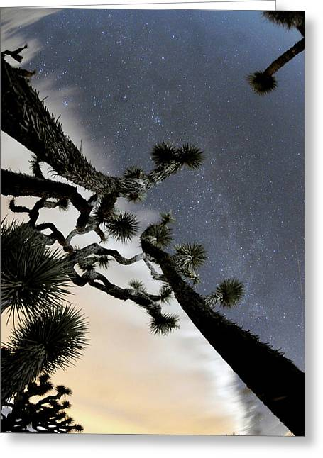 Joshua Tree Two Greeting Card by Mike Lindwasser Photography