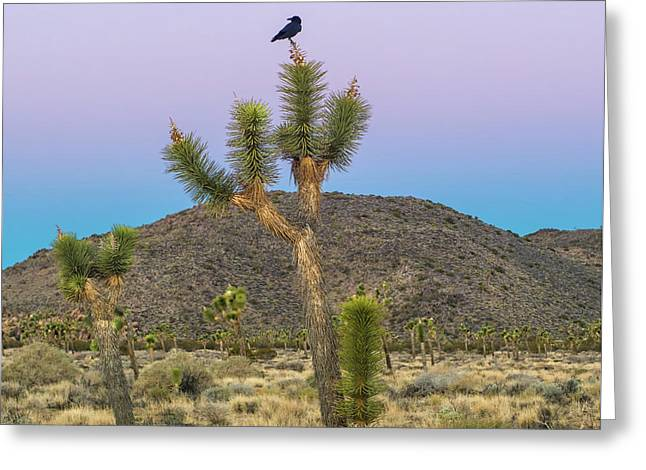 Joshua Tree With Crow Greeting Card