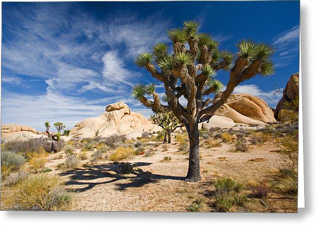 Joshua Tree With Shadow Greeting Card by Panoramic Images