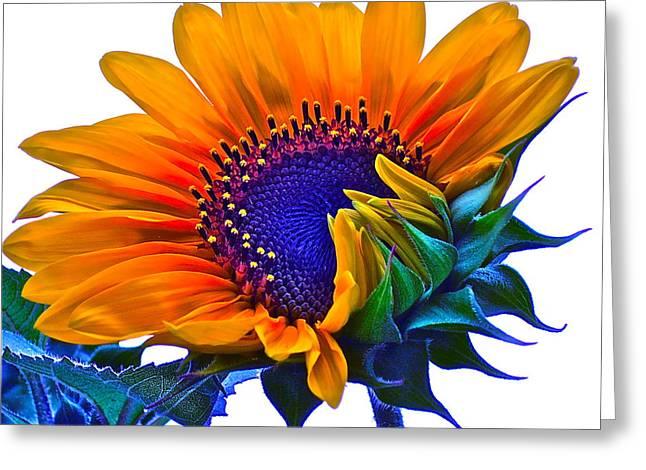 Joyful Greeting Card by Gwyn Newcombe