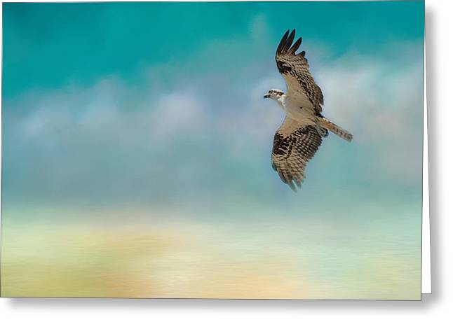 Joyful Morning Flight - Osprey Greeting Card