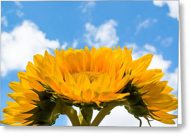 Joyful Sunflowers Greeting Card by Shelby  Young