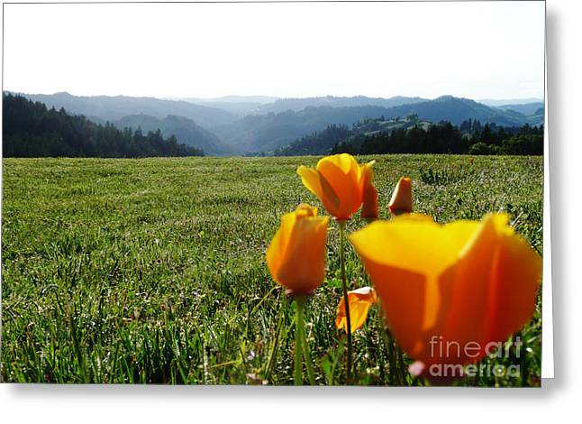 Jubilant Poppies Greeting Card by JoAnn SkyWatcher