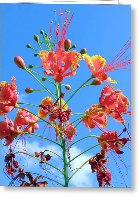 Jubilation Greeting Card by Rose  Hill