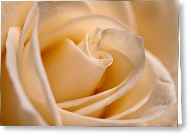 Flora Photo Greeting Cards - Judys Rose Greeting Card by Shannon Workman