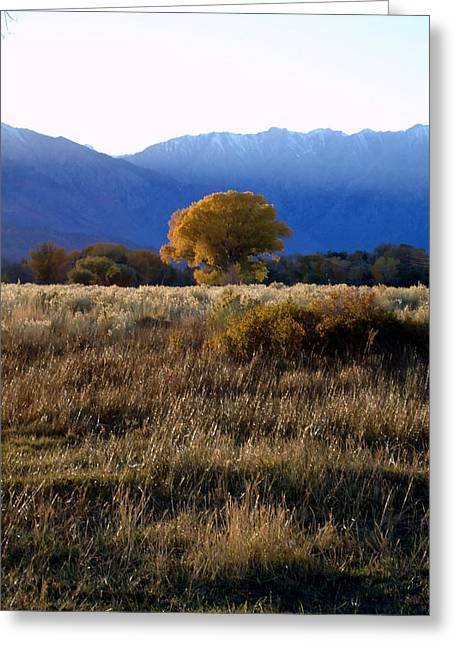 Judy's Tree Greeting Card by Steven Holder